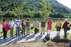Sajenje dreves ob 50-letnici HD Radeče, 26. 6. 2013